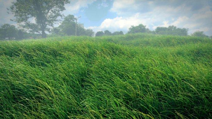 pressedgrass