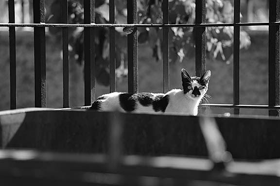 Cat in Jerusalem July 2013 002 sm